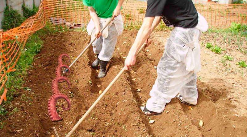 Hosteleros de A Mariña elaboran un plan para cultivar pulpo en secano y generar excedente de cara a octubre