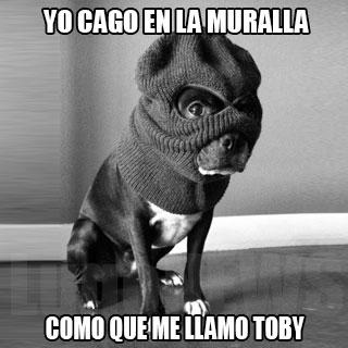 yo cago en la muralla como que me llamo Toby