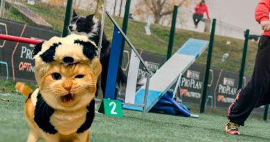 Descalifican a un participante del concurso canino de Agility porque su perro era un gato disfrazado