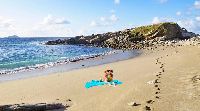 La Diputación de Lugo habilita 5 playas para perros en A Mariña, pero prohíbe la entrada a los humanos.