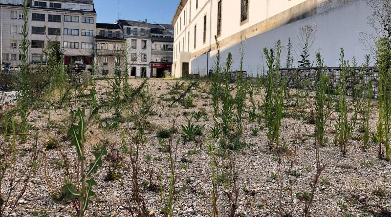 El Ayuntamiento ultima los preparativos para la cosecha en los jardines del cuartel de San Fernando
