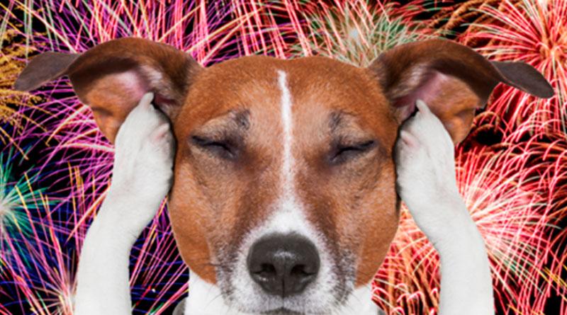 Biona presenta en San Froilán un pienso capaz de hacer que los perros no escuchen los fuegos artificiales