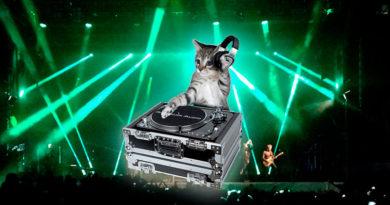 El gato que encendió un equipo de música la pasada noche en Fontiñas candidato a cabeza de cartel en San Froilán